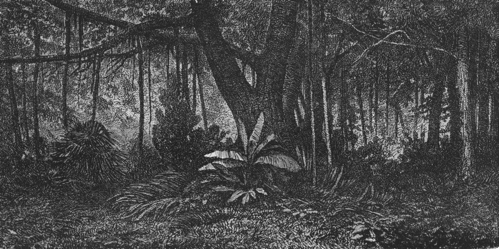 Associate Product INDONESIA. Forest in Java 1880 old antique vintage print picture