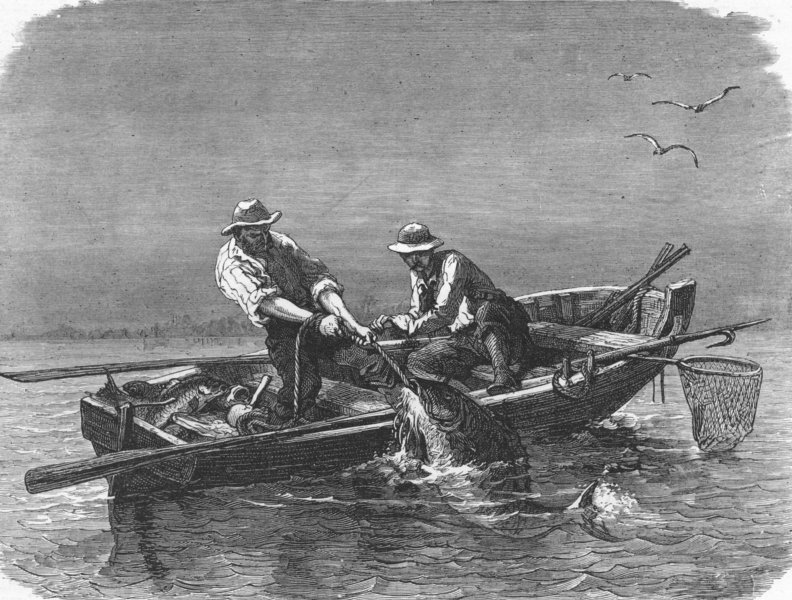 Associate Product FLORIDA. Hauling in Drum-fish 1880 old antique vintage print picture