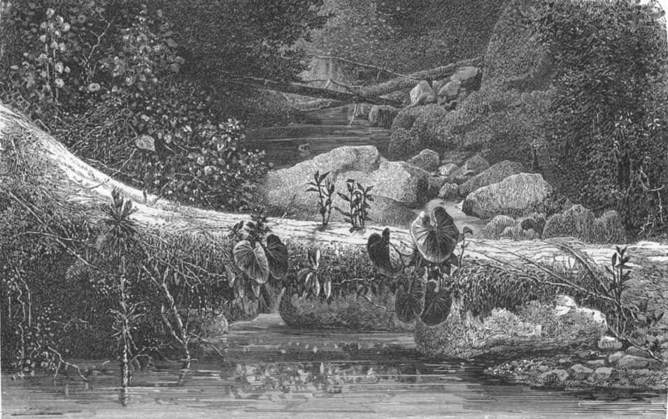 Associate Product BRAZIL. Organ Mountains. fallen monarch 1880 old antique vintage print picture