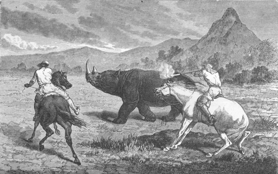 Associate Product SOUTH AFRICA. Shooting Rhinoceros 1880 old antique vintage print picture