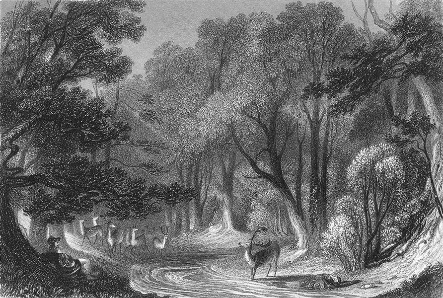 Associate Product WARCS. Forest of Arden. Sargent Deer 1854 old antique vintage print picture