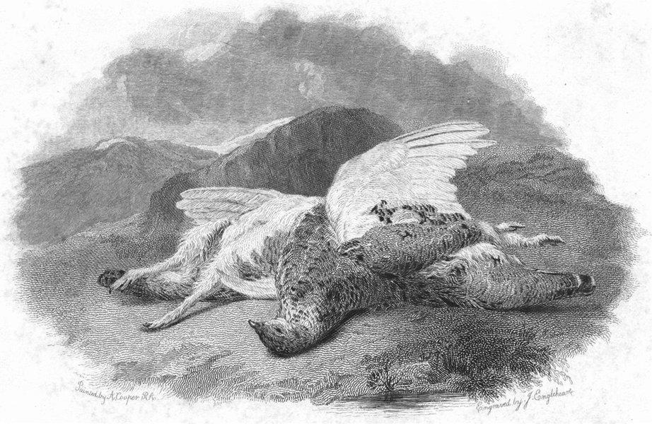 Associate Product BIRDS. Ptarmigan 1832 old antique vintage print picture