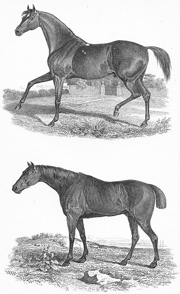 Associate Product HORSES. Natural History XI Race c1849 old antique vintage print picture