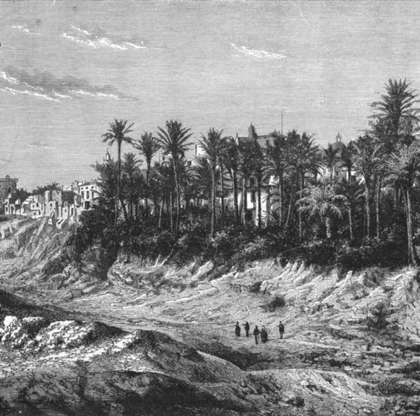 Associate Product SPAIN. Palm grove of Elche c1885 old antique vintage print picture