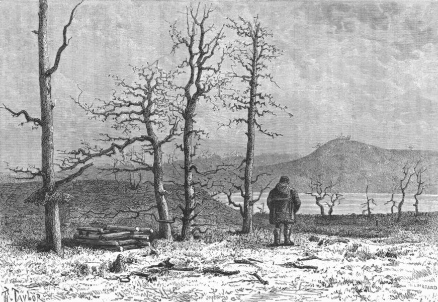 Associate Product SIBERIA. Larch Forest, Boganida, Tributary Katanga c1885 old antique print