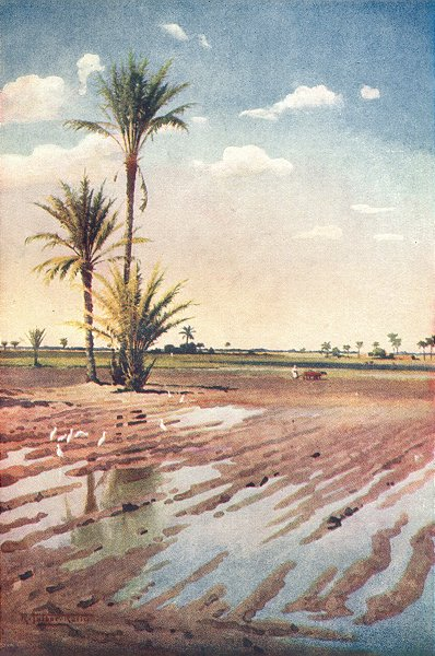 Associate Product EGYPT. An irrigated field 1912 old antique vintage print picture