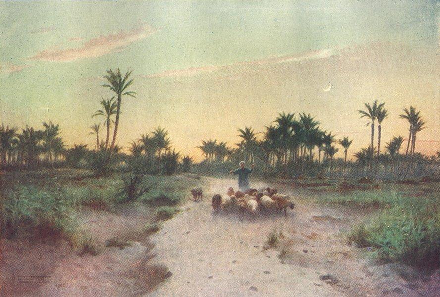 Associate Product EGYPT. Land of Goshen-Evening 1912 old antique vintage print picture