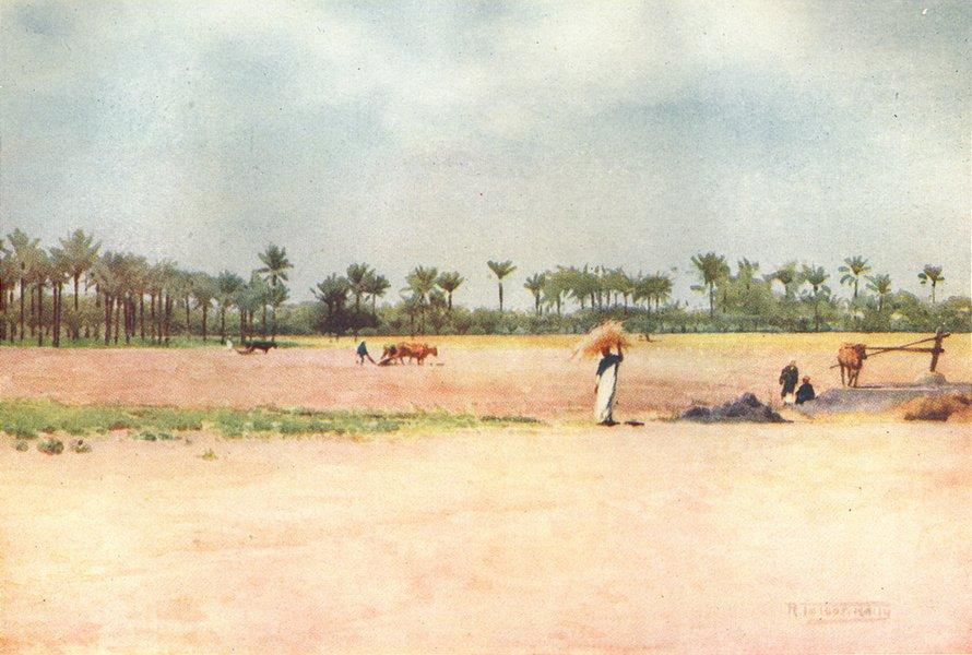 Associate Product EGYPT. Esbet-el-Ekiad - Land of Goshen 1912 old antique vintage print picture