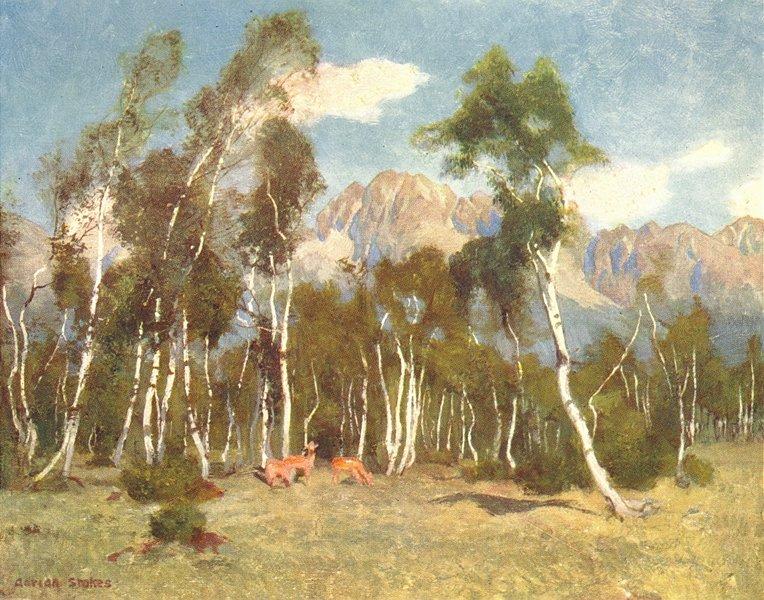 Associate Product VAZEC. Carpathian Mountains from Lucsivna-Furdo 1909 old antique print picture