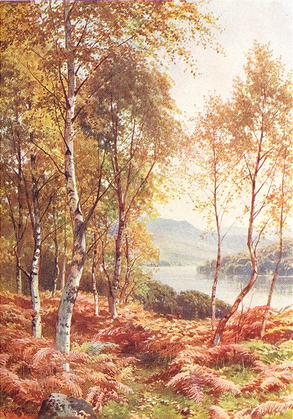 Associate Product SCOTLAND. Birches, Loch Achray, Perthshire 1904 old antique print picture