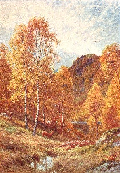 Associate Product SCOTLAND. Golden Autumn, Trossachs, Perthshire 1904 antique print picture