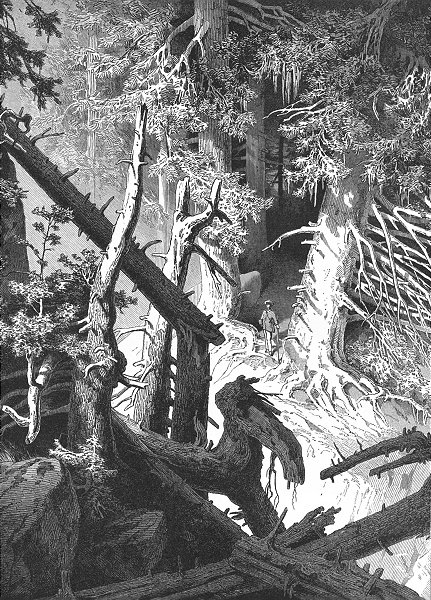 Associate Product SWITZERLAND. Pine Forest 1891 old antique vintage print picture