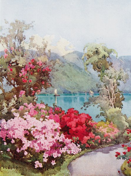 ITALY. Lake Como. Azaleas, Lago di Como 1905 old antique vintage print picture