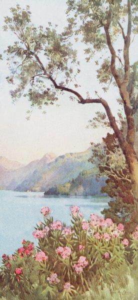 Associate Product ITALY. Lake Como. Lago di Lecco, Lago di Como 1905 old antique print picture