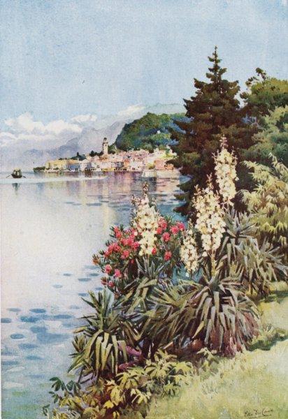 ITALY. Lake. Lago di Como. Yuccas, Villa Melzi 1905 old antique print picture