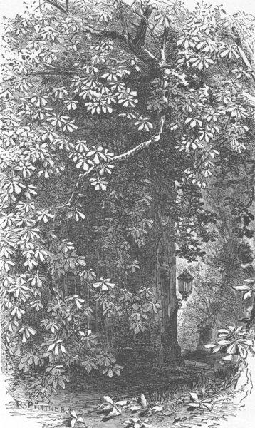Associate Product GERMANY. Castle Garden, Biebrich 1903 old antique vintage print picture