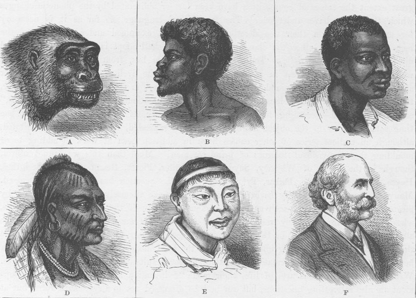 Associate Product PORTRAITS. Types of heads 1890 old antique vintage print picture