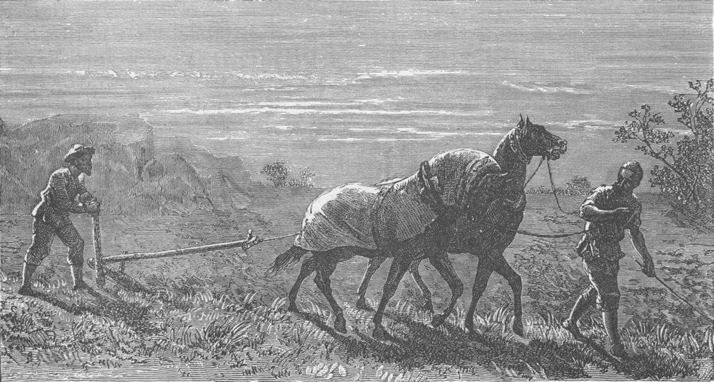 Associate Product TURKMENISTAN. Turkoman ploughing 1892 old antique vintage print picture
