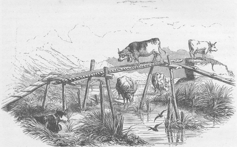 Associate Product SWITZERLAND. Pastures of the valley of Meiringen 1894 old antique print