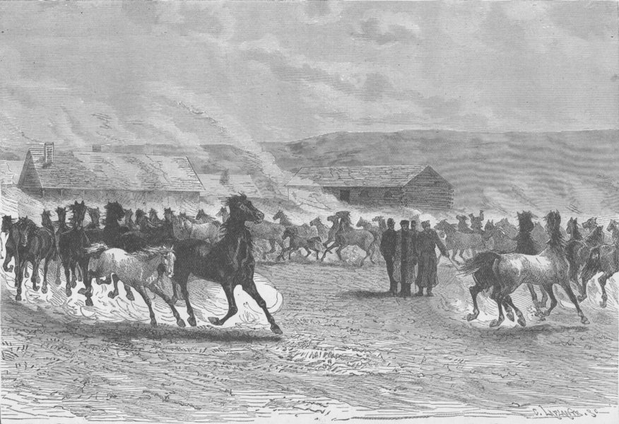 Associate Product UKRAINE. The imperial stud at Prevallie, reserved for Cossack cavalry 1894