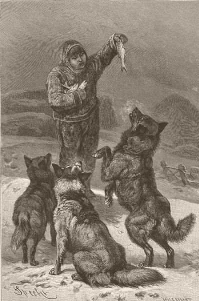 Associate Product DOGS. An Eskimo and his dogs 1893 old antique vintage print picture