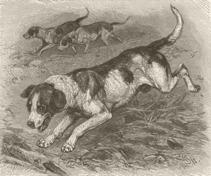 Associate Product DOGS. Foxhounds in full cry 1893 old antique vintage print picture