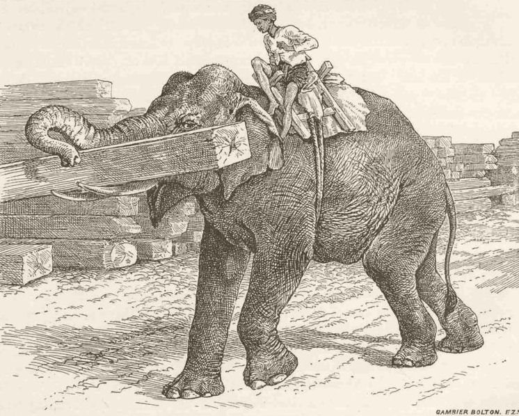 Associate Product ELEPHANTS. Elephant carrying timber 1894 old antique vintage print picture