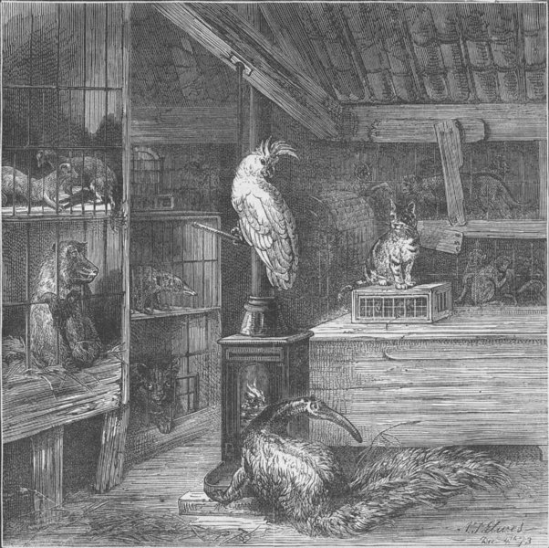 Associate Product WAPPING. A wild-beast shop. London c1880 old antique vintage print picture