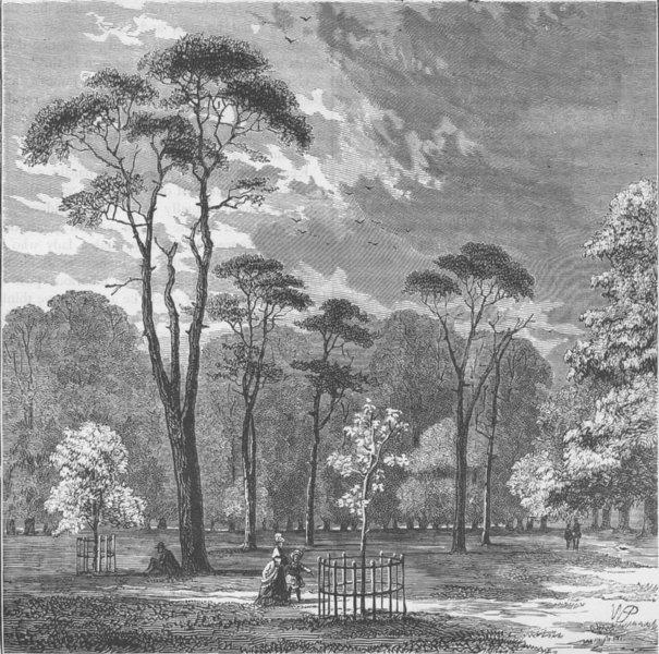 Associate Product KENSINGTON PALACE. The Scotch firs, Kensington Gardens. London c1880 old print