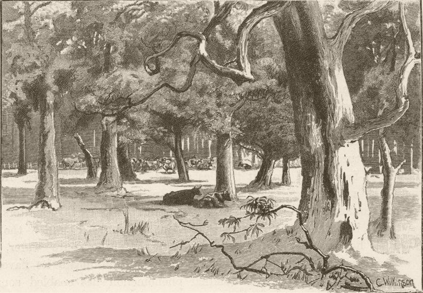 Associate Product AUSTRALIA. West Ports of Victoria. Camperdown 1890 old antique print picture