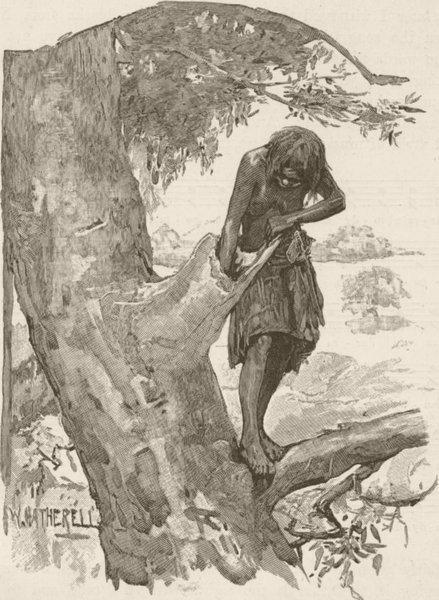 Associate Product AUSTRALIA. West. Opossum hunting 1890 old antique vintage print picture