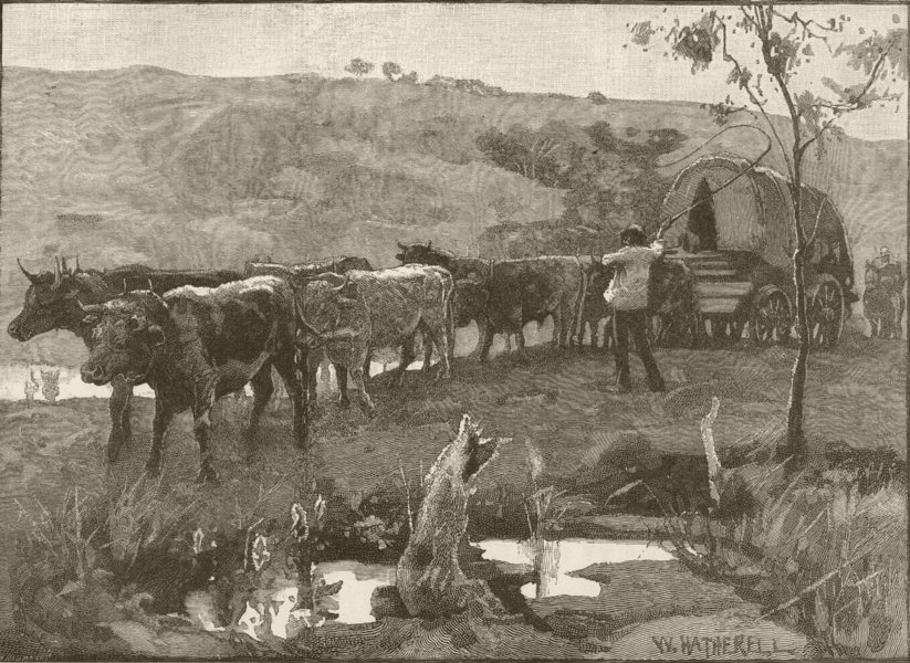 Associate Product AUSTRALIA. . A bullock waggon 1890 old antique vintage print picture