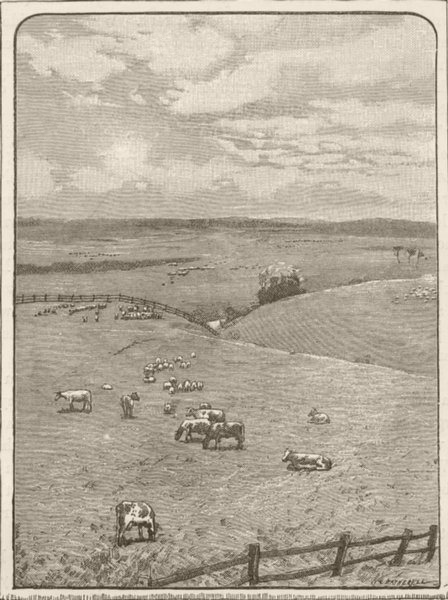 Associate Product QUEENSLAND. South . Darking downs from King's creek 1890 old antique print