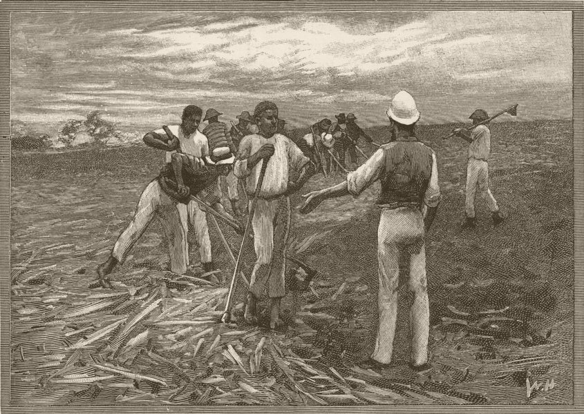 Associate Product QUEENSLAND. Sugar Industry. Clearing ground 1890 old antique print picture