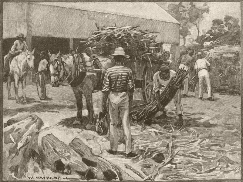 Associate Product QUEENSLAND. Sugar Industry. Stacking canes 1890 old antique print picture