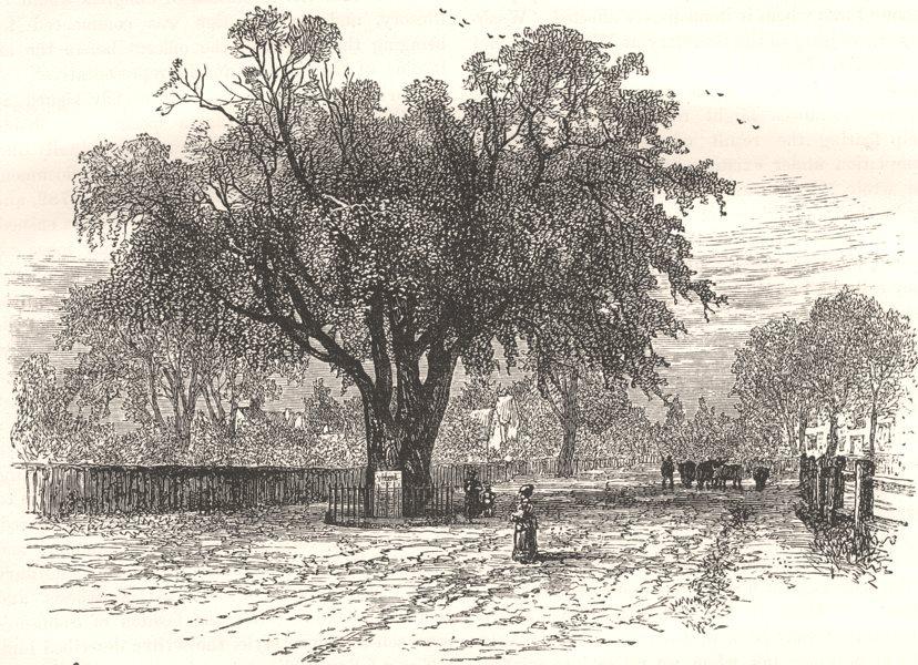 Associate Product MASSACHUSETTS. Washington Elm, Cambridge c1880 old antique print picture