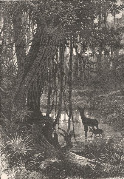 Associate Product FLORIDA. Forest scenery, Florida c1880 old antique vintage print picture