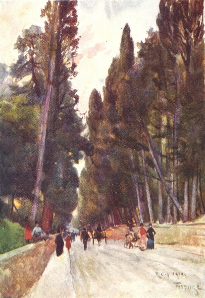Associate Product TUSCANY TOSCANA. Cypress Avenue of Poggio Imperiale; road to Arcetri 1905