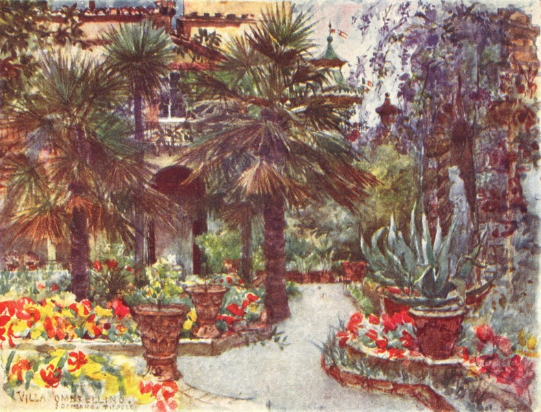 Associate Product FLORENCE FIRENZE. Tulips & Wisteria in spring, in the garden of a Villa 1905