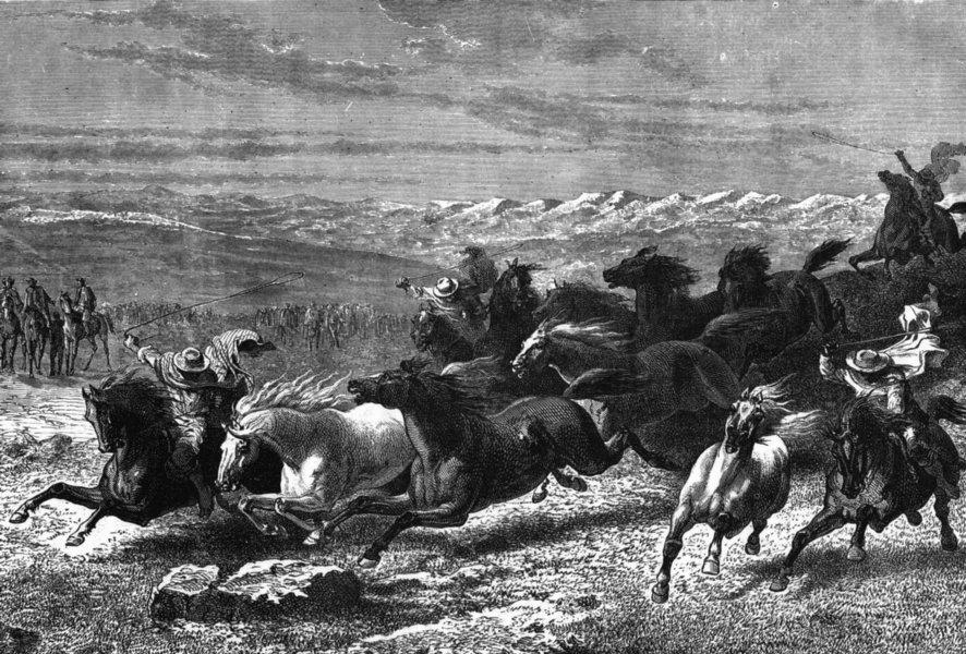 USA. Catching horses, Prairies Lasso c1880 old antique vintage print picture