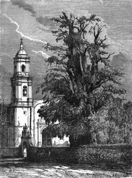 Associate Product MEXICO. Tree of Sad Night, Popotla c1880 old antique vintage print picture
