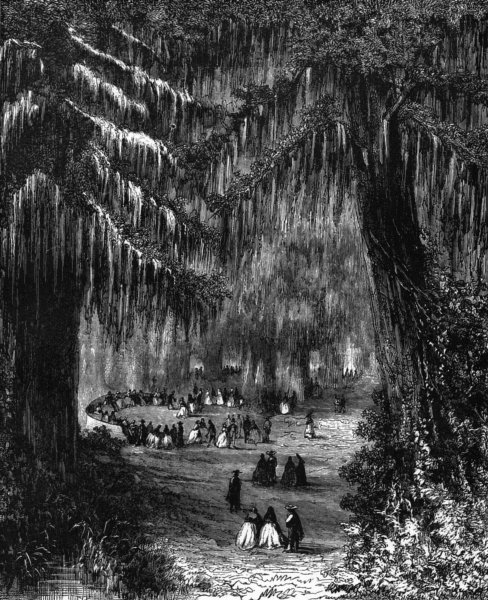 MEXICO. Cypress Grove of Chapultepec c1880 old antique vintage print picture