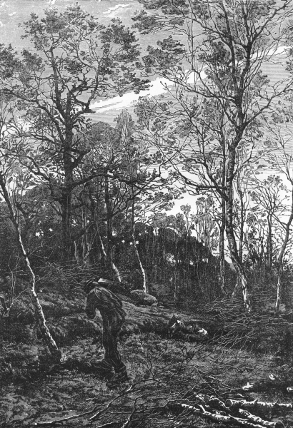 Associate Product LOIRE. Loire valley. Woodland Scene. Banks of the Loire c1878 old print