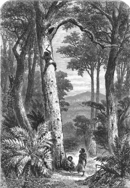 Associate Product AUSTRALIA. A Native climbing a tree for Opossum 1886 old antique print picture