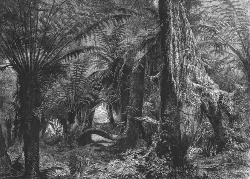 Associate Product AUSTRALIA. Australian Fauna and Flora. Australian Tree-Ferns 1886 old print