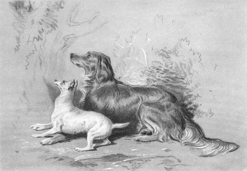 Associate Product DOGS. Safe!-Landseer c1880 old antique vintage print picture