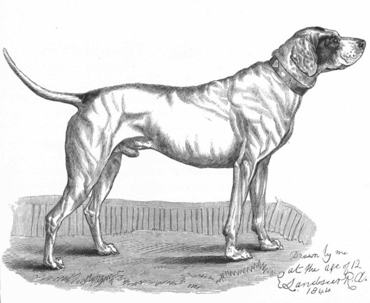 Associate Product DOGS. A Favourite Pointer-Landseer c1880 old antique vintage print picture
