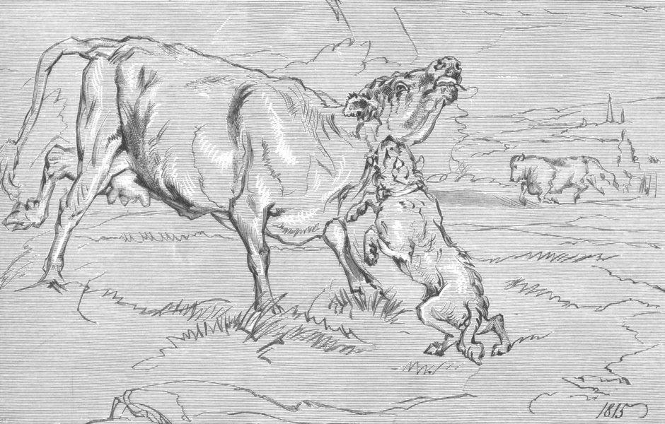 MILITARIA. Attack(Dog & Cow)-Landseer c1880 old antique vintage print picture