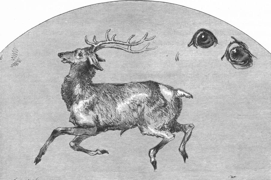 Associate Product DEER. Tired(Deer)-Landseer c1880 old antique vintage print picture