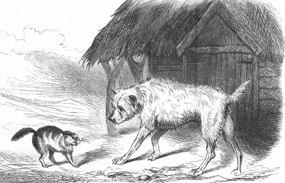 DOGS. Impending Quarrel(Dog & Cat)-Landseer c1880 old antique print picture